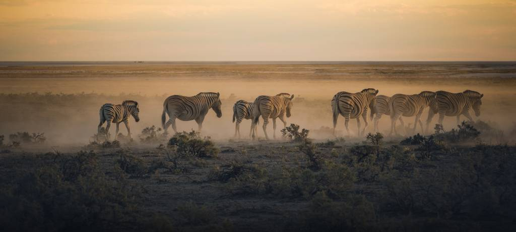 Group Of Zebras Walking In A Mist In The Plains Of Etosha National Park.