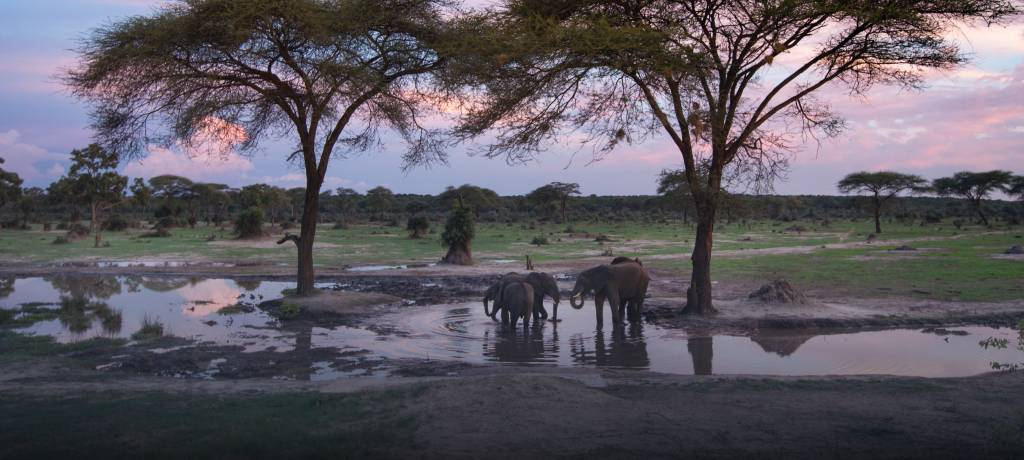 see elephants at waterhole