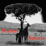 Malazi Safaris