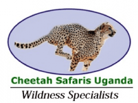 Cheetah Safaris Africa