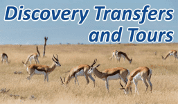 Discovery Transfers and Tours