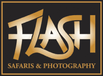 Flash Safaris and Photography