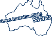 Great Australian Bight Safaris