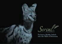 Serval Safaris