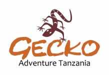 Gecko Adventure
