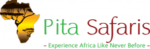 Pita Safaris