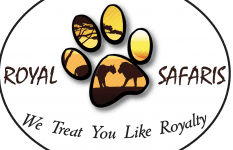 Royal Paw Safaris