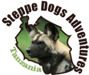 Steppe Dogs Adventures Ltd