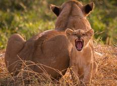 3 Tage Safari im Ruaha Nationalpark Rundreise