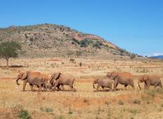 Kenyan National Park Safari - 9 Days Tour