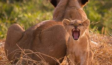 3 Days Safari in Ruaha National Park Tour