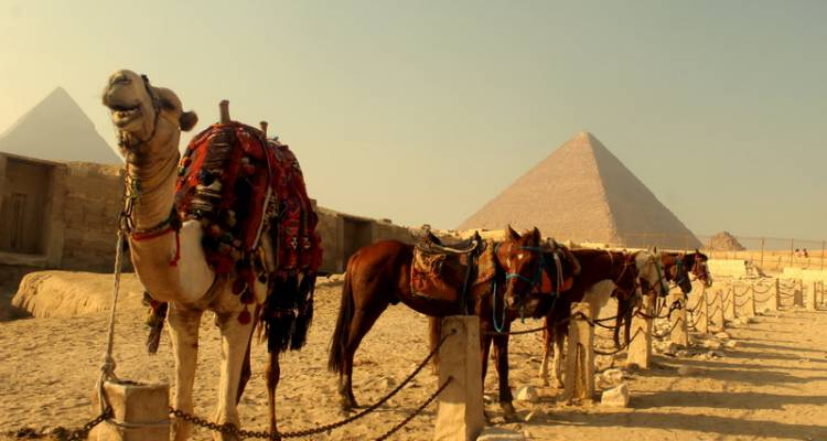 Nile Jewel 9 Days, 5* Nile Cruise & The Red Sea - Timeless Tours