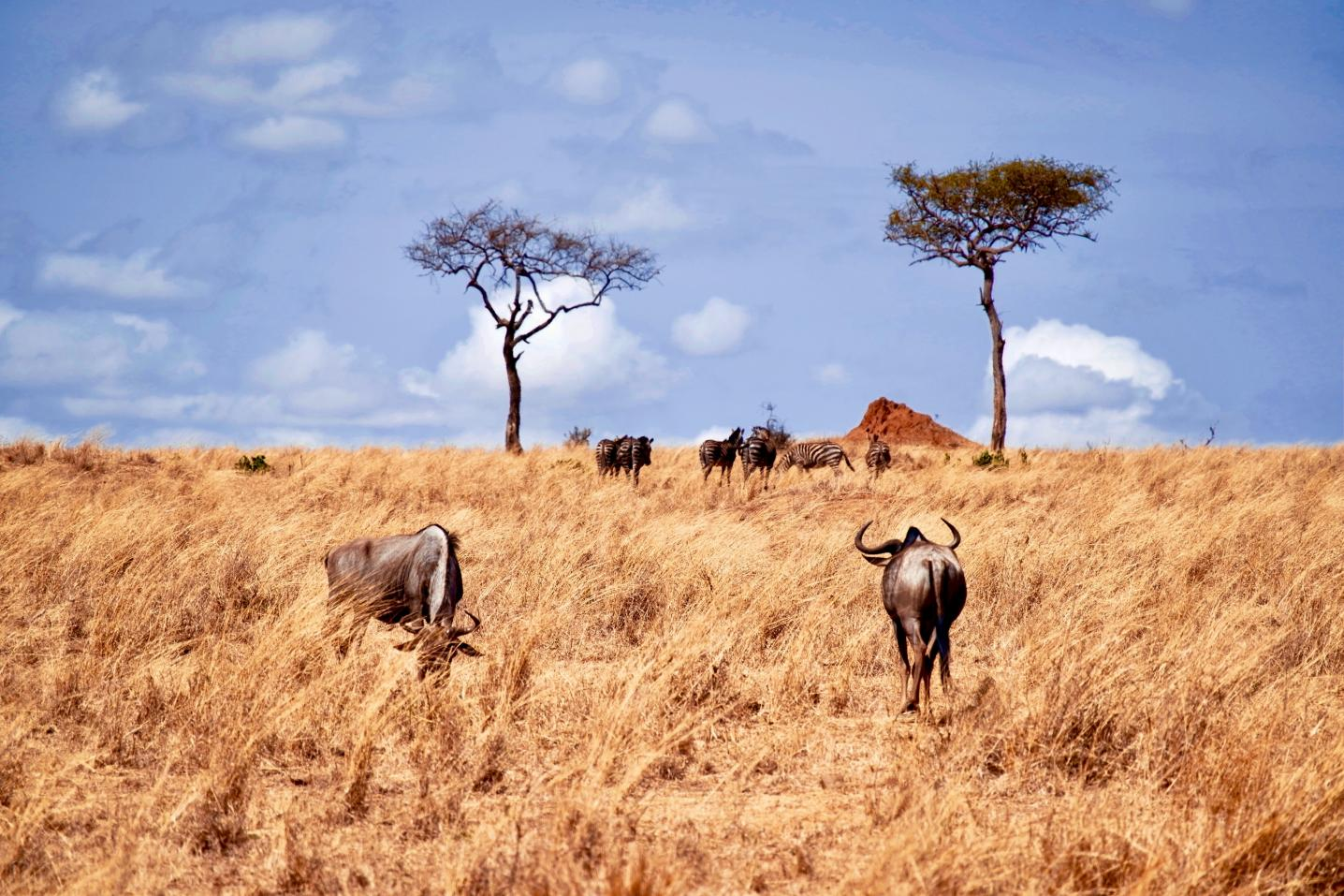 Serengeti Wakanda Tours and Safaris