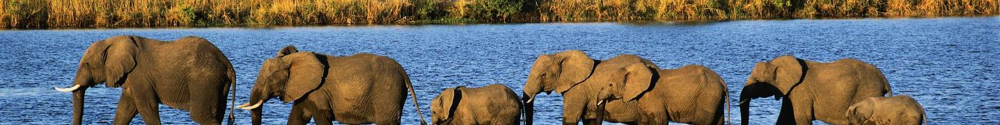 All Nature Expeditions Africa Ltd Tours