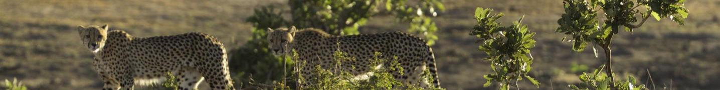 Tour Operators & Travel Companies in Kruger National Park