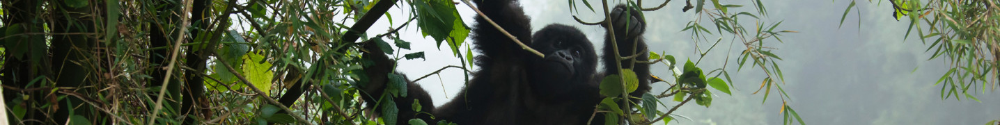 All Rwanda World Expeditions Tours