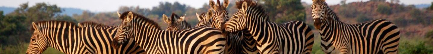 All Marvelous Mobile Safari Tours