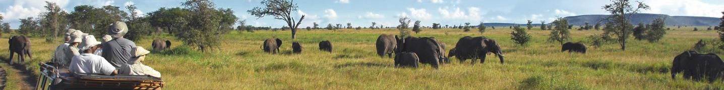 All African Expedia Tours