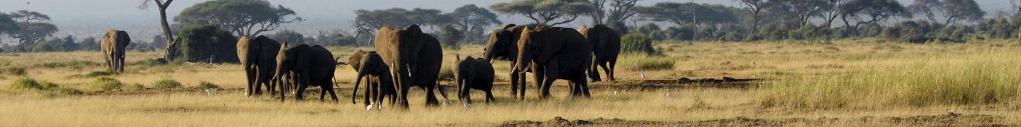 All Arlom Kenya Safaris Tours