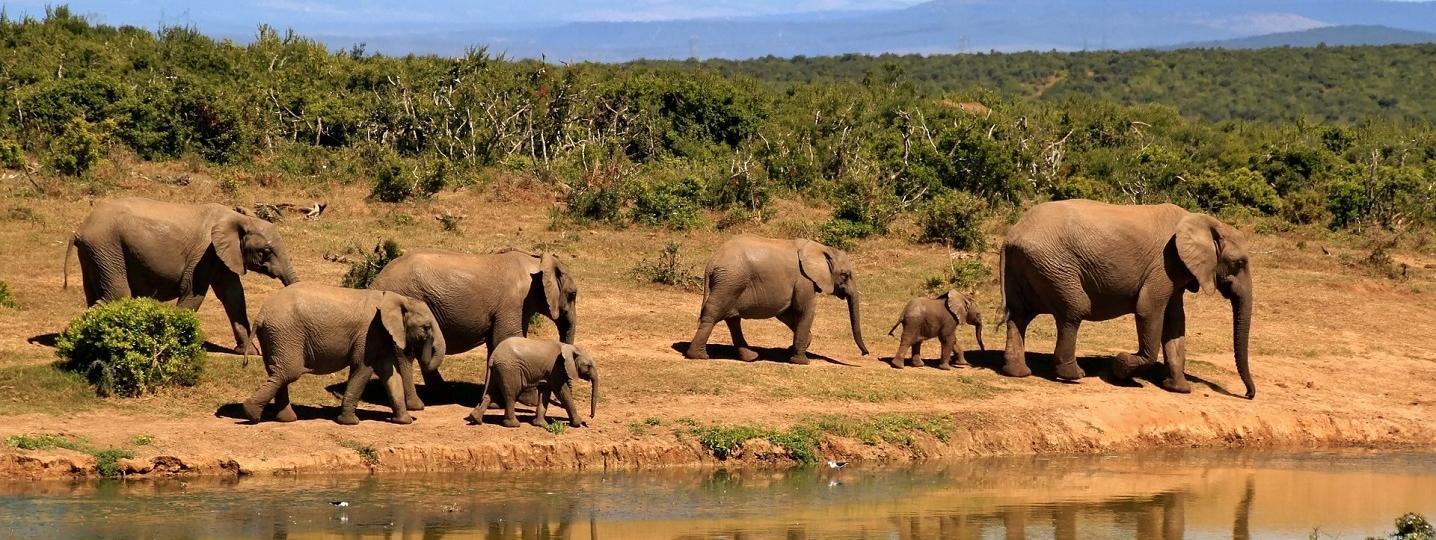 Amboxseli Kenya Safari