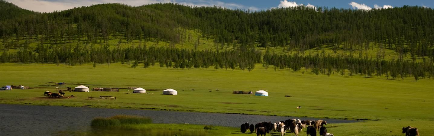 All Amicus Travel Mongolia Tours