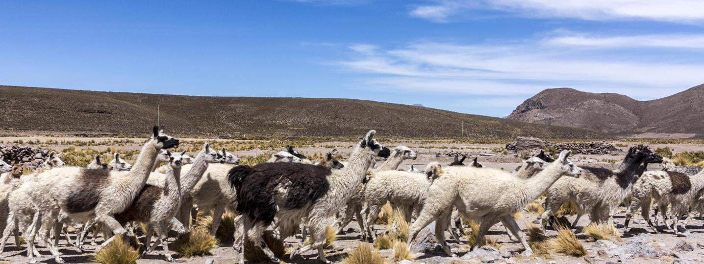 Andes Mountains Tours & Trips 2019