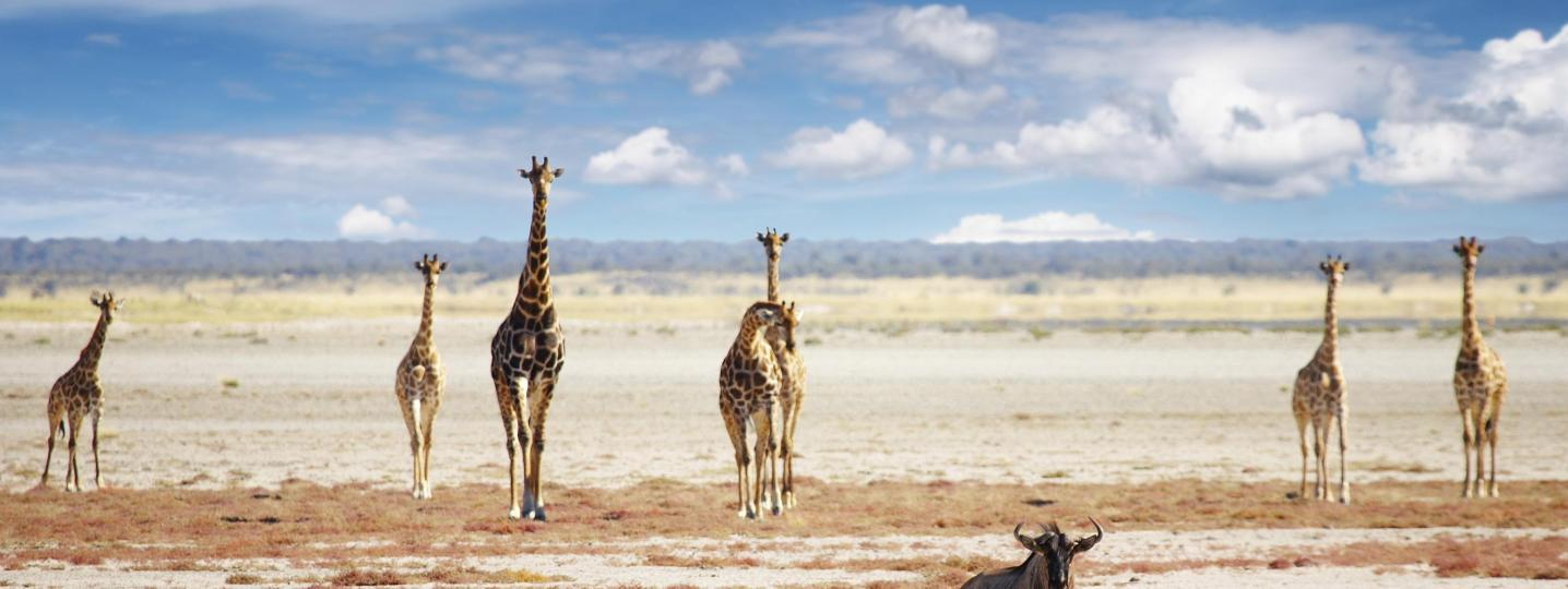 The Great African Rift Valley Tours & Trips 2018/2019