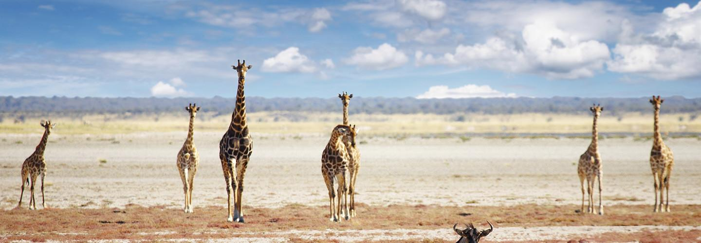 Namibia November 2019 Tours & Trips