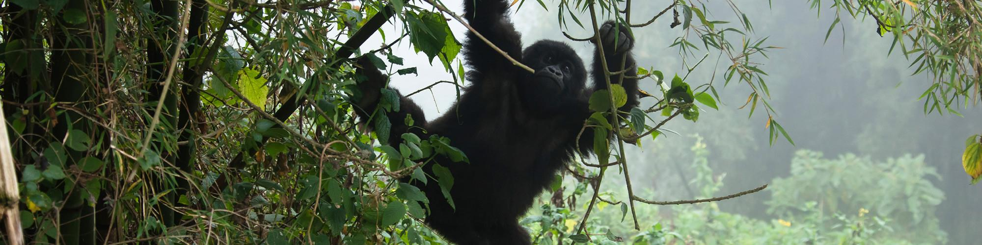 All Rwanda Safari 2 Gorilla Tours (U) Ltd