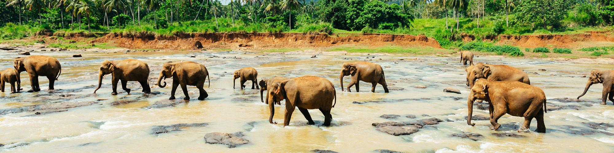 Sri Lanka in April 2019 Tours & Trips