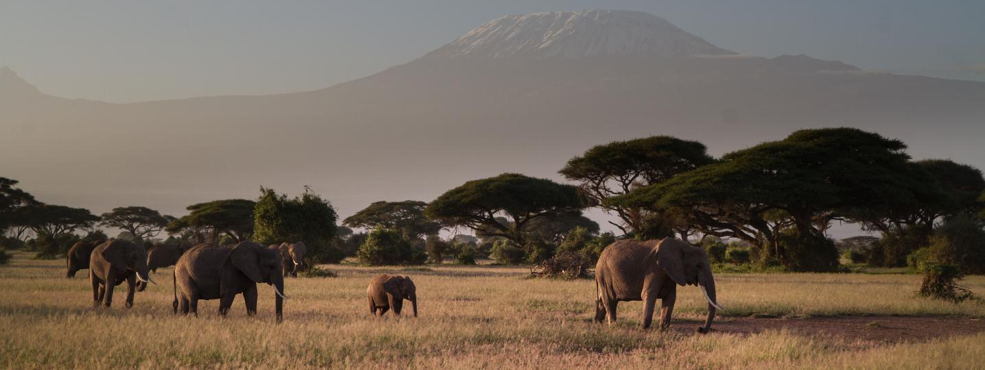 Tanzania Safari Travel Packages
