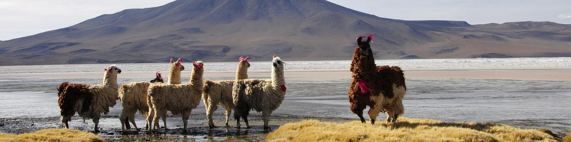 Bolivia in April 2019 Tours & Trips