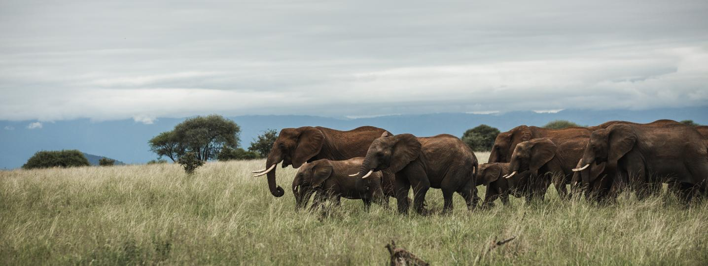 Safari Soles tours Tour Deals, Promo Code, Early Bird and