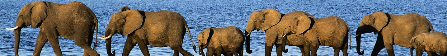 Botswana in September 2018 Tours & Trips