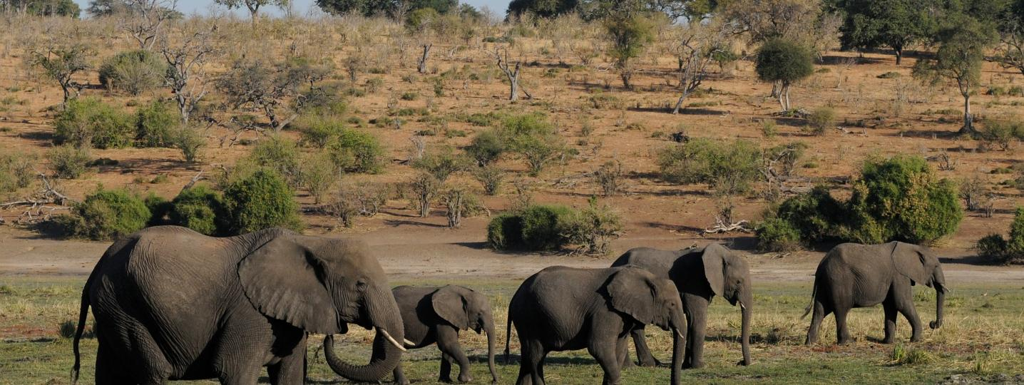 Botswana Tours in Summer 2019