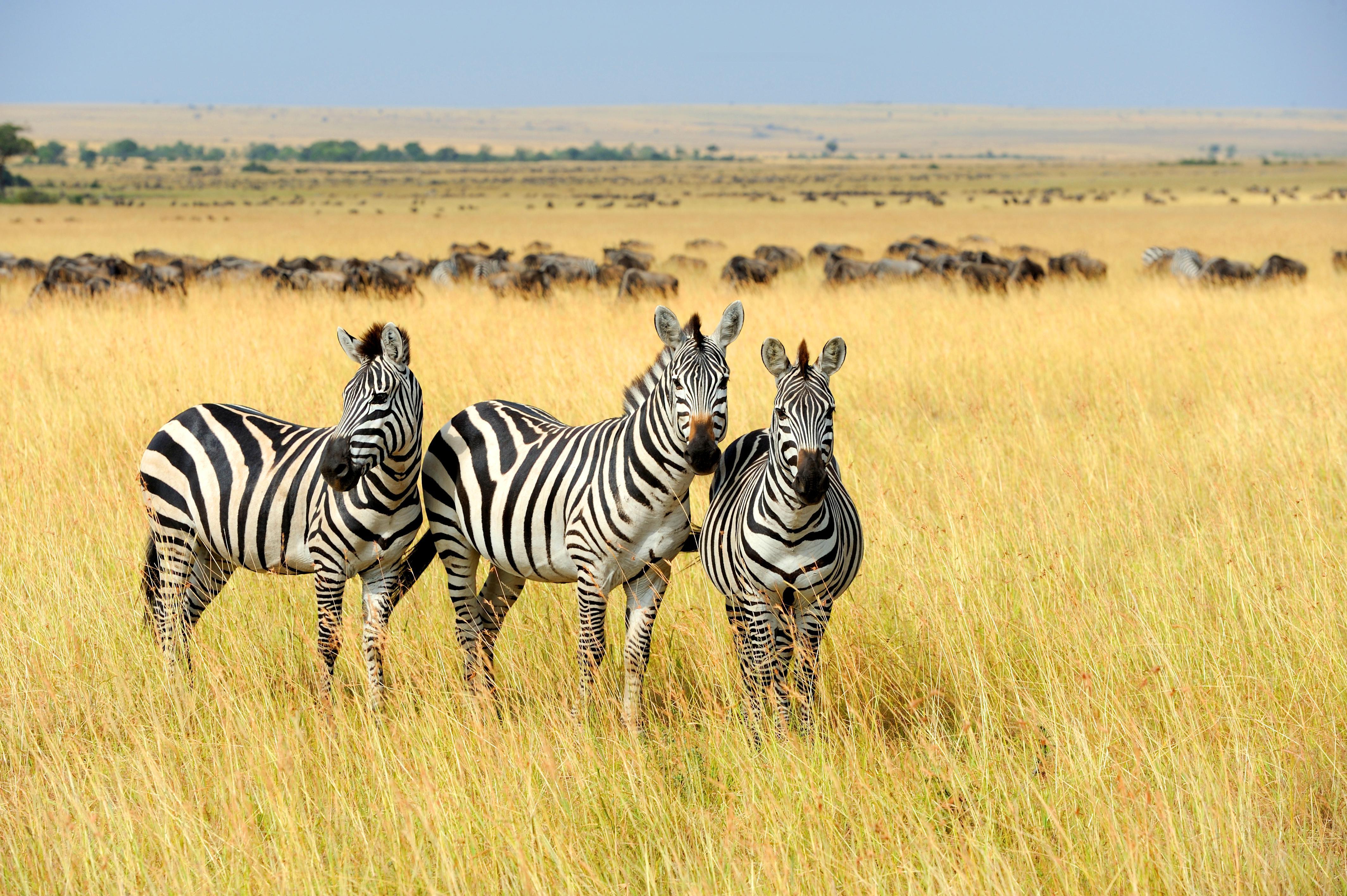 50 Wild Safari African Animals Novelty Money Bills Lot