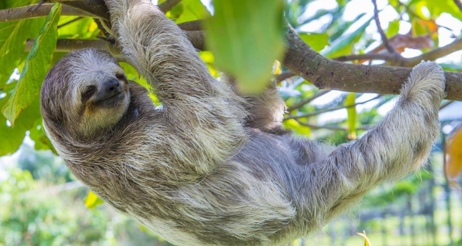 Highlights of Costa Rica Tour - Solo Travellers Group Holidays