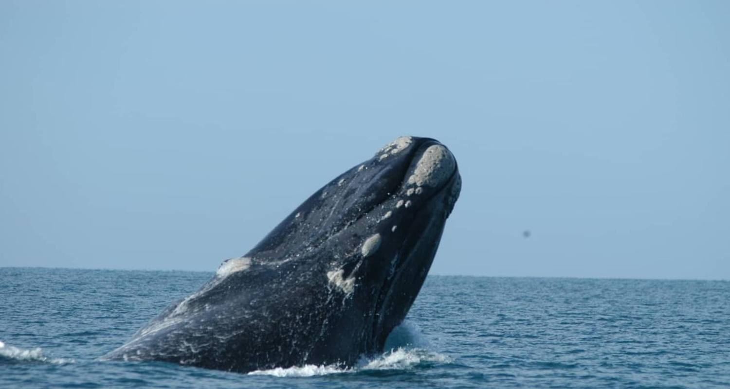 3-Day Whale Watching Tour - Xplore Eyre