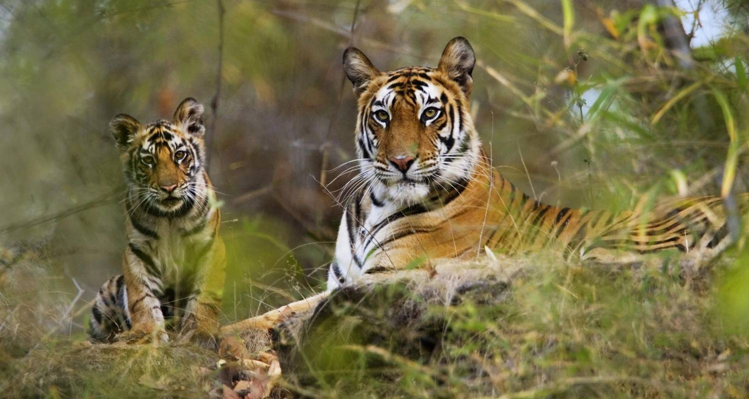 Exciting Wildlife Safari Tour in India - GeTS Holidays