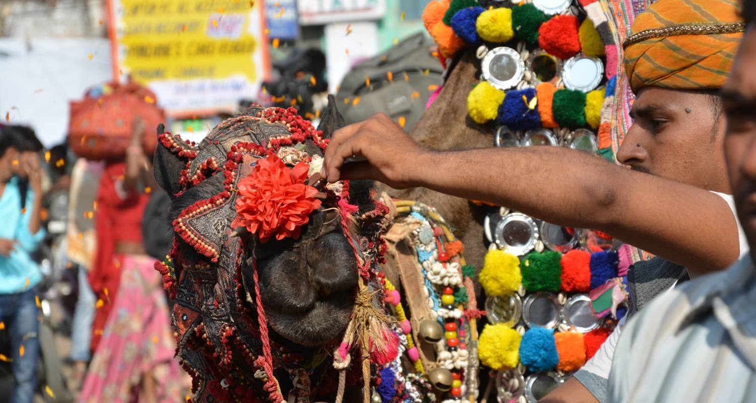 The Pushkar Fair Tour - Largest Cattle Fair Of World - MTA Destination Experts