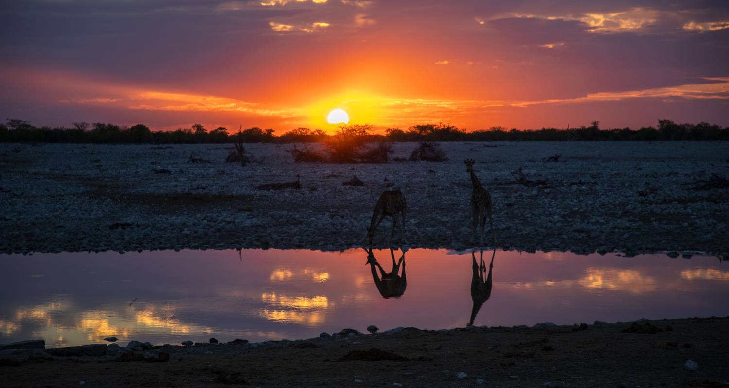 4-Day Etosha National Park (Lodging) - Discovery Transfers and Tours