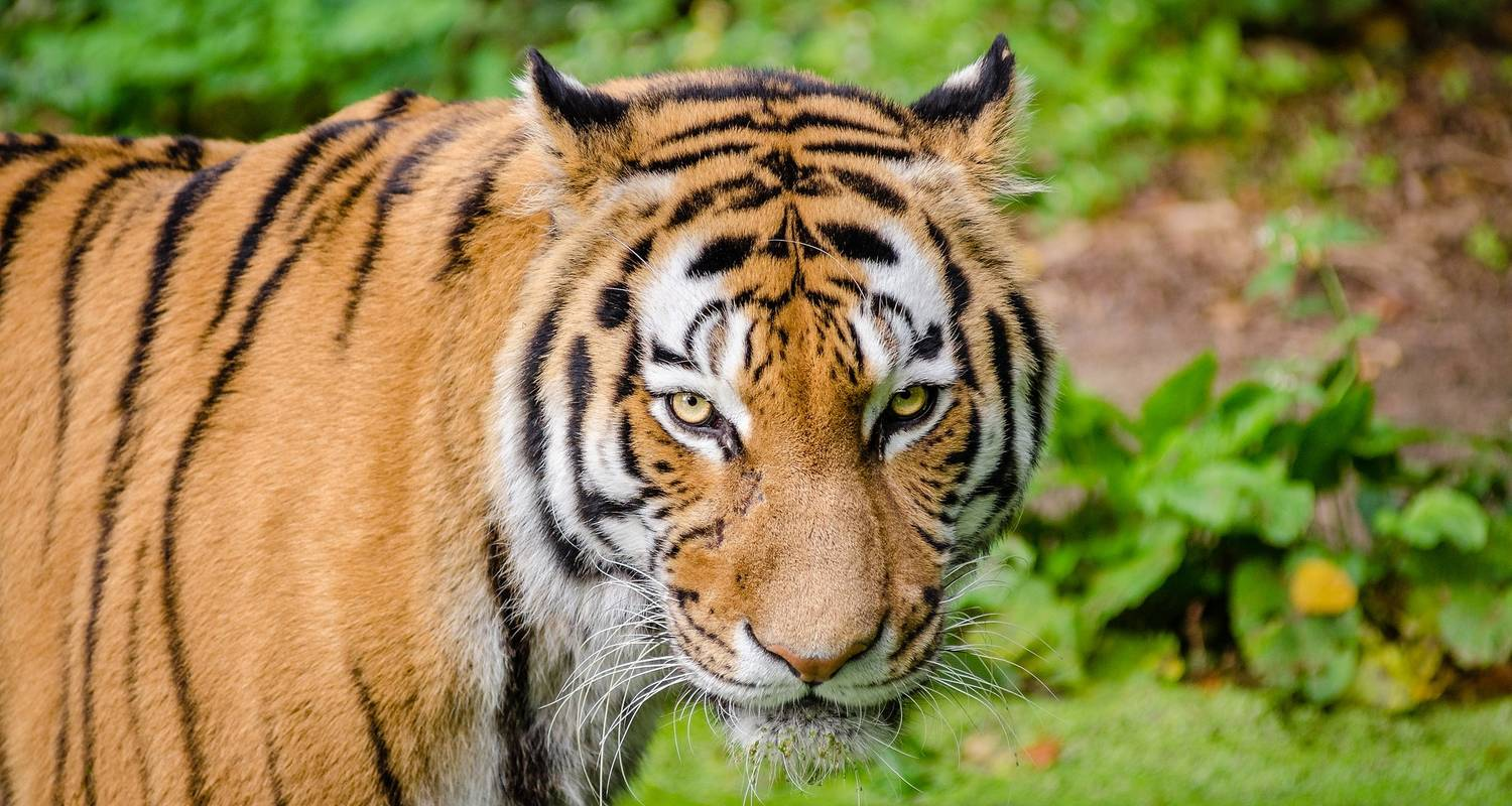 Indias Golden Triangle And The Tigers Of Ranthambore With Dubai & Kathmandu 2019