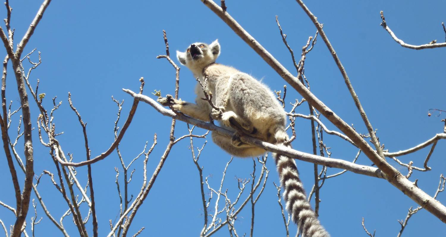 Admire lemurs on the RN7 - Green Island Discovery