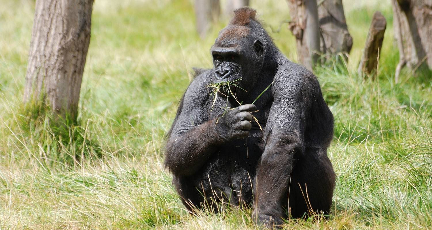 3-Day Uganda Gorillas and Golden Monkey Trekking Safari - Bamboo Ecotours