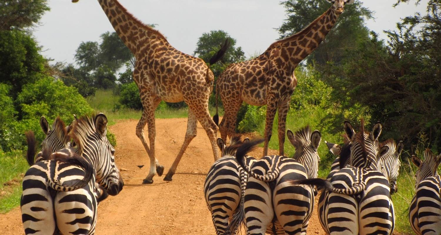 Highlights of Tanzania and Kenya 12 Days - Evergreen Tours