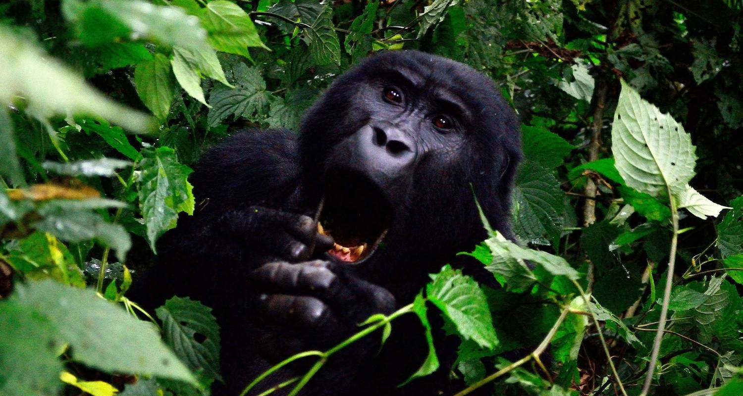 5 days Gorilla, Chimps & Wildlife safari in Uganda - Friendly Gorillas Safaris