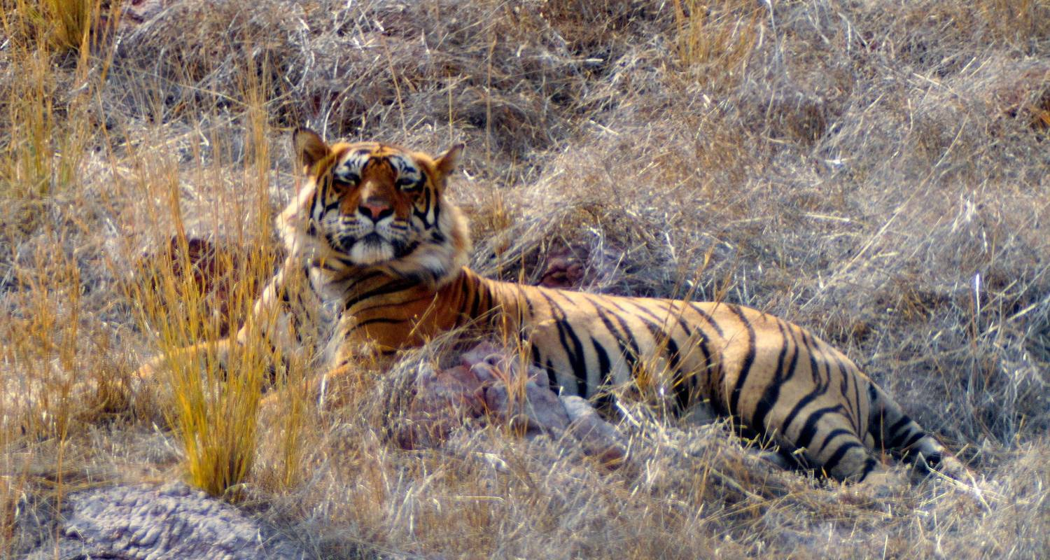 Goldenes Dreieck mit Sariska Nationalpark - YatraExotic