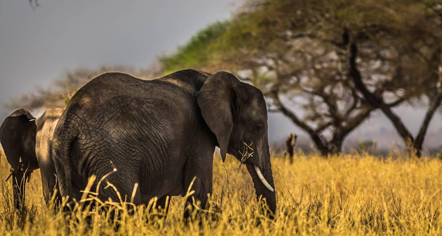 5 Days Luxury Ruaha National Park Safari - Land Savannah and Trekking