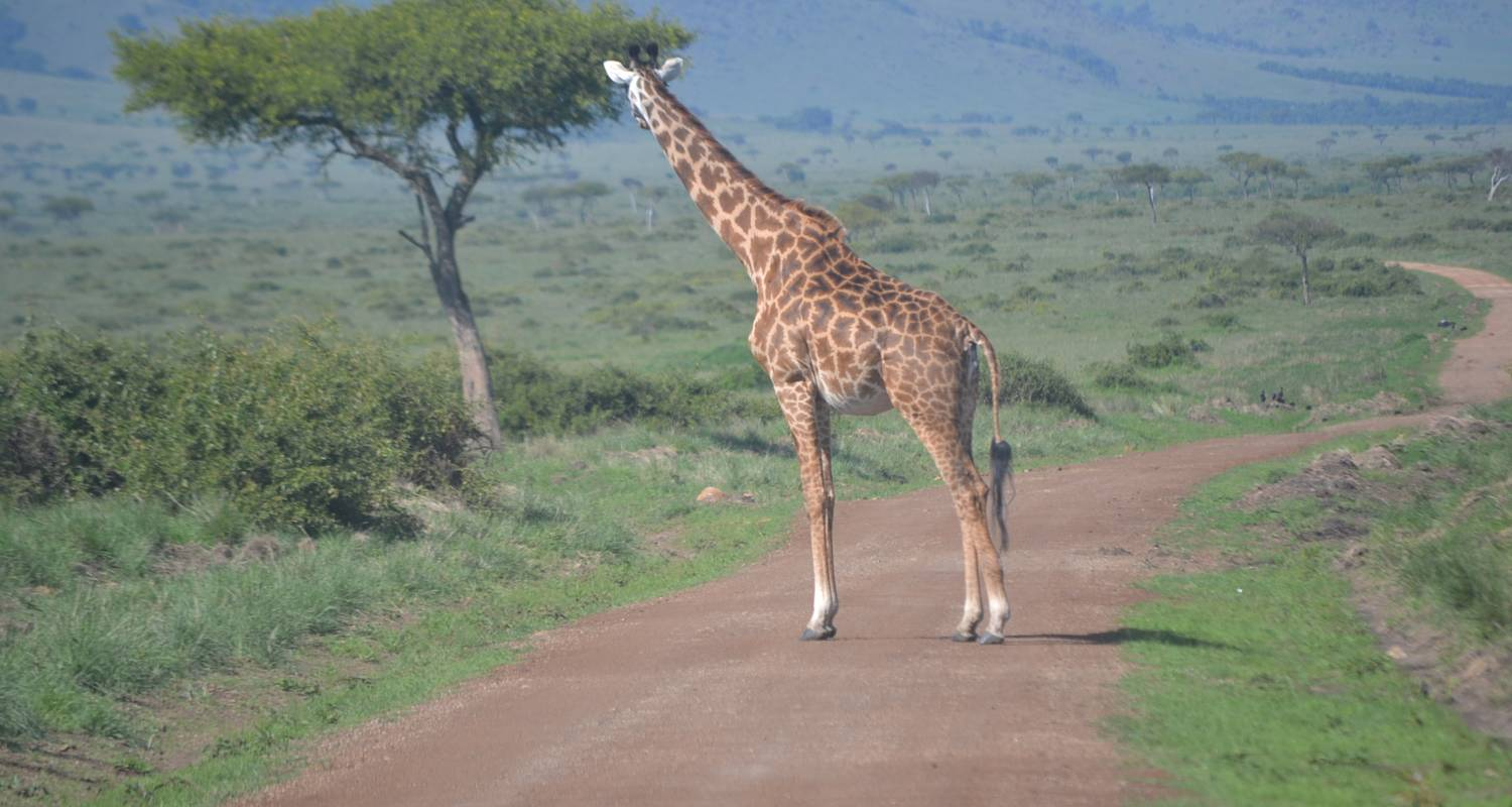 7 Days Kenya Budget Camping Safari By Exciting Africa Holidays With 1 Tour Review Code Eah 007 Tourradar