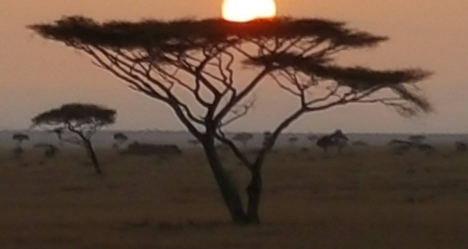 Amazing 4 days Safari Northern Tanzania  - Nest of Africa Safaris